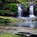 Pretty Waterfalls In Rainforest by Kaye Menner