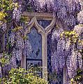 Pretty Window by Svetlana Sewell