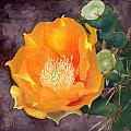 Prickly Pear Blossom by Sue Sill