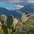 Prickly Pear Cactus And Mountains by Ingela Christina Rahm