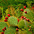 Prickly Pear Cactus by Bonnie Willis