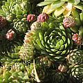 Pricks Of Green by Bryanna Henry