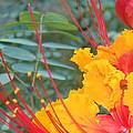 Pride Of Barbados Photo by Lynn Maverick Denzer