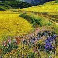 Primavera by Dragica  Micki Fortuna