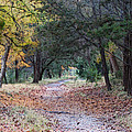 Primrose Path Ramble by Wendy J St Christopher