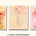 Primrose Triptych by Linde Townsend
