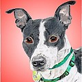 Princess - A Former Shelter Sweetie by Dave Anderson