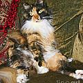 Princess Miss Gizzie By Diana Sainz by Diana Raquel Sainz