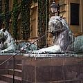 Princeton Tigers by Madeline Ellis