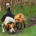 Probably The World's Worst Hunting Dog by Mircea Costina Photography