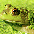 Profiling Frog by Optical Playground By MP Ray