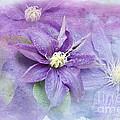 Profusion Of Purple by Betty LaRue