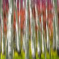 Progression Of Autumn by Adam Romanowicz