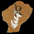 Pronghorn  Pictograph by Dale Jackson