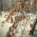 Prospect Park Winter Scene by Jeff Watts