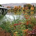Prosser - Autumn Bridge by Carol Groenen