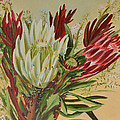 Protea Bunch by Aileen McLeod