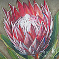 Protea by Leigh Banks