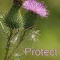Protect Nature by Doris Potter