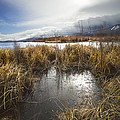 Protected Wetlands by Dianne Phelps