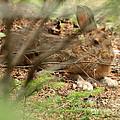 Proud Hare by Lloyd Alexander