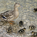 Proud Mother by David Birchall