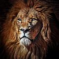 Proud N Powerful by Elaine Malott
