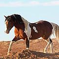 Proud Paint Mustang by Jean Clark