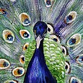 Proud Peacock by Mary Cahalan Lee- aka PIXI