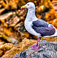 Proud Thayer Gull by Jim Carrell