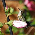 Proudful Little Hummingbird by Janice Adomeit