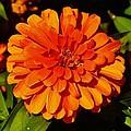 Proven Winners Flower by Daniel Thompson