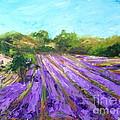 Provence Corner 2 by Alina Vidulescu