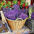 Provence Lavender by Brian Jannsen