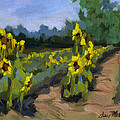 Provence Sunflower Field by Diane McClary