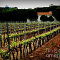 Provence Vineyard by Lainie Wrightson