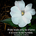 Proverbs 11 - 2 by Dave Bosse