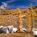 Prusik Peak Above Larch Grove by Tracy Knauer