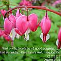 Psalms 27 14 Bleeding Hearts by Sara  Raber