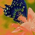 Psychadelic Butterflys by Chanelle Sheridan