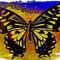 Psychedelic Butterfly by Bill Owen