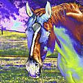 Psychedelic Horse by Peter Lloyd