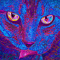 Psychedelic Kitty by Jane Schnetlage