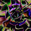 Psychedelic Rubber Plant by Joseph Hedaya