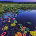 Psychedelic Shore - Great Meadows Nwr by Sylvia J Zarco