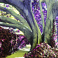 Psychedelic Purple Fuschsia Earthy Tree Street Landscape Los Angeles Cool Artistic Affordable Art by Marie Christine Belkadi