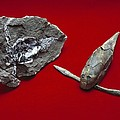 Pterichthyodes, Fish Fossil by Science Photo Library