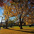 Public Garden Fall Tree by Toby McGuire