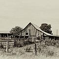 Puckerbrush Rd Barn  by Wilma  Birdwell
