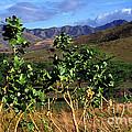 Puerto Rico Cayey Mountains Near Salinas by Thomas R Fletcher